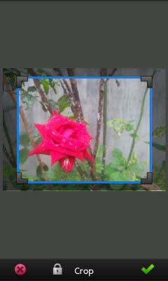 pm_crop_move.jpg