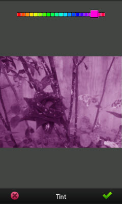 pm_tint_purple.jpg